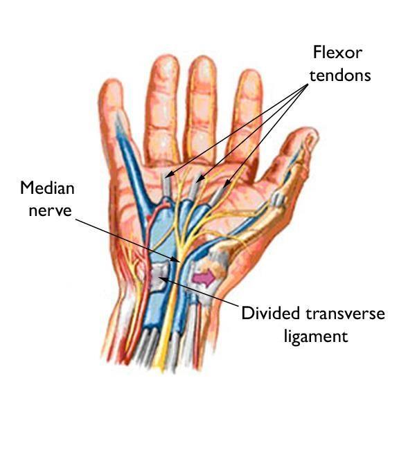 Diagram of hand anatomy